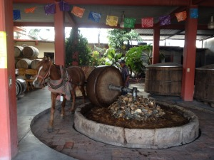 Mescal production