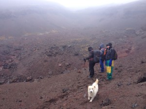 At 4800m, dogs dont feel the altitude?