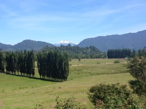Carratera Austral - lush green